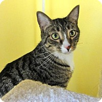 Adopt A Pet :: Simon - Broomall, PA