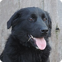 Adopt A Pet :: Elphie Chiffon - Newcastle, OK