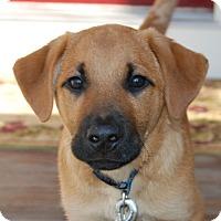 Adopt A Pet :: *Clay - PENDING - Westport, CT