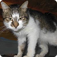 Adopt A Pet :: Finn - N. Berwick, ME