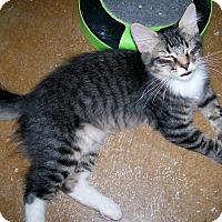Adopt A Pet :: Hops - Scottsdale, AZ