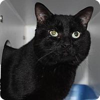 Adopt A Pet :: Hudson - Hamilton, ON