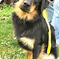 Adopt A Pet :: Maximus-ADOPTION PENDING - Boulder, CO