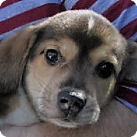 Adopt A Pet :: Magnum - Germantown, MD