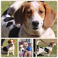 Adopt A Pet :: Emmylou~ meet me ! - Glastonbury, CT