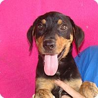 Adopt A Pet :: Niko - Oviedo, FL