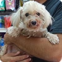 Adopt A Pet :: Oscar - Brooklyn, NY
