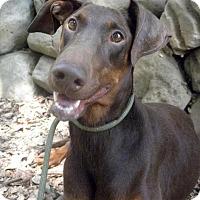 Adopt A Pet :: Coco - Fillmore, CA