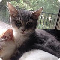 Adopt A Pet :: Gandolph - El Cajon, CA