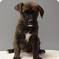 Adopt A Pet :: Mayflower - Valparaiso, IN