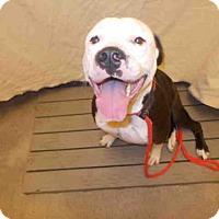 Adopt A Pet :: CEASAR - Upper Marlboro, MD
