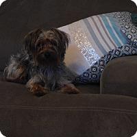 Adopt A Pet :: Cleo - West Deptford, NJ