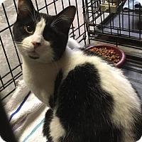 Adopt A Pet :: Sonny - Tonawanda, NY