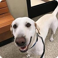 Adopt A Pet :: Charlie - Darien, GA