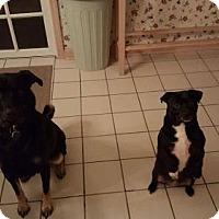 Adopt A Pet :: Deuce - Newfield, NJ