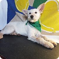 Adopt A Pet :: Dali - San Diego, CA