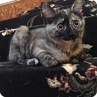 Adopt A Pet :: Mouse - Arlington/Ft Worth, TX
