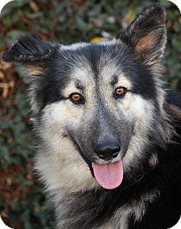 Nicholas von Nikols   Adopted Dog   Los Angeles, CA ...