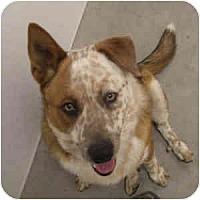 Adopt A Pet :: Danny - Phoenix, AZ