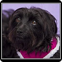 Adopt A Pet :: Terra - Ft. Bragg, CA