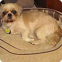 Adopt A Pet :: Fern - Garland, TX