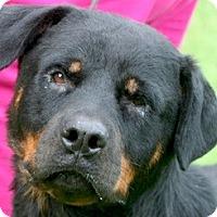 Adopt A Pet :: Cheyenne - Alachua, GA