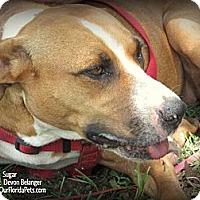 Adopt A Pet :: Sugar - Eustis, FL