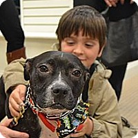 Adopt A Pet :: Mickey - Reisterstown, MD