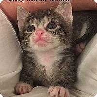 Adopt A Pet :: Nicole - Island Park, NY