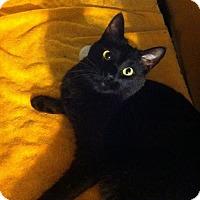 Adopt A Pet :: Emma - Watkinsville, GA