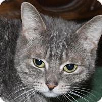 Adopt A Pet :: Whiskers - Hamilton, ON