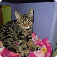 Adopt A Pet :: Charles - Medina, OH