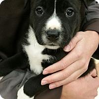 Adopt A Pet :: Charity - Ogden, UT