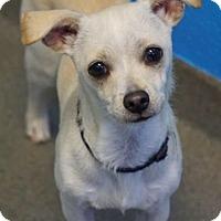 Adopt A Pet :: Dusty - Carteret/Eatontown, NJ