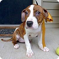 Adopt A Pet :: Maxine - Baton Rouge, LA