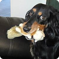 Adopt A Pet :: Ghaleon - Oak Ridge, NJ