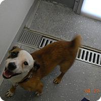 Adopt A Pet :: GIZMO - Sandusky, OH
