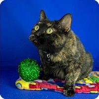 Adopt A Pet :: Coraline - Sherwood, OR