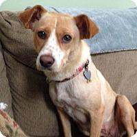 Adopt A Pet :: Ingrid - Morganville, NJ