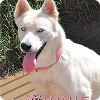 Adopt A Pet :: Winnie - Carrollton, TX