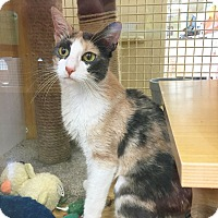 Adopt A Pet :: Tabor - Arlington/Ft Worth, TX