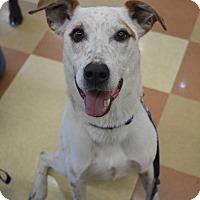 Adopt A Pet :: Casey - Ogden, UT
