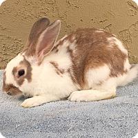 Adopt A Pet :: Gary - Bonita, CA