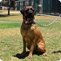 Adopt A Pet :: Annie - Goodyear, AZ