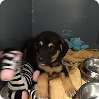 Adopt A Pet :: Dak - Groton, MA