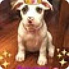 Adopt A Pet :: Baby Laurel