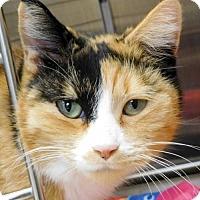 Adopt A Pet :: Aspen - Jefferson, WI