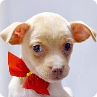 Adopt A Pet :: Thea - San Francisco, CA