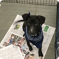 Adopt A Pet :: Zayne - Patterson, NY