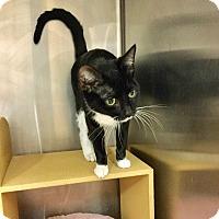 Adopt A Pet :: Mitzi - Colmar, PA